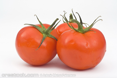 Juicy Tomatoes isolated over whiter