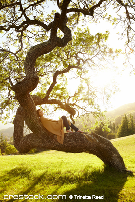 Beautiful woman relaxing in a large tree in na...