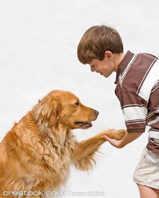 Little Boy Shaking Hands With Dog